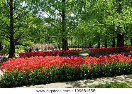 KEUKENHOF HOLLAND - MAY 14 2017: Lanes of tulips in the Royal Keukenhof Park