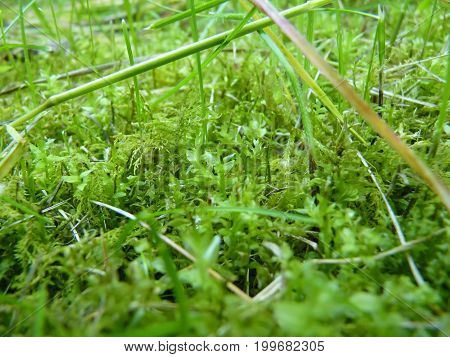 Low Close Up Macro Detail Of Moss And Grass