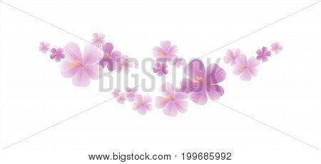 Flowers design. Flowers background. Sakura flying flowers isolated on white background. Apple-tree flowers. Cherry blossom. Vector