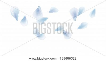 Petals design. Flower background. Petals Roses Flowers. White Blue Sakura flying petals isolated on white background. Vector EPS 10, cmyk