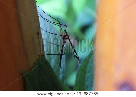 mal mosquito sitting on a porch rail