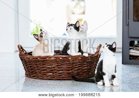 Cute kittens looking up with curiosity in apartment
