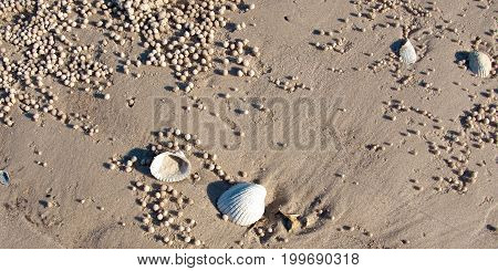Beach Shells and Sand Balls. World heritage site Frazer Island - This tropical island is the largest sand island in the world with numerous pristine white sandy beaches and crystal clear ocean water.