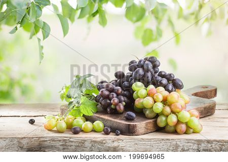 Bunches of ripe grapes on a wooden table in the garden