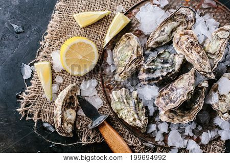 Open raw oysters with slices of lemon and ice. Top view