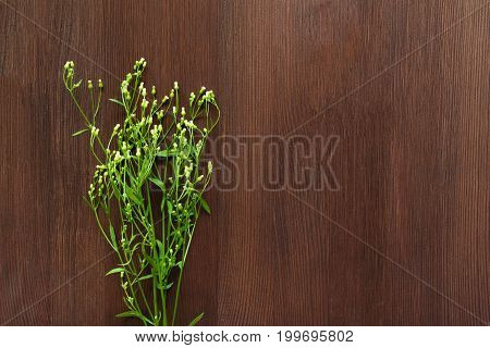 Small white wild flowers on brown wooden background