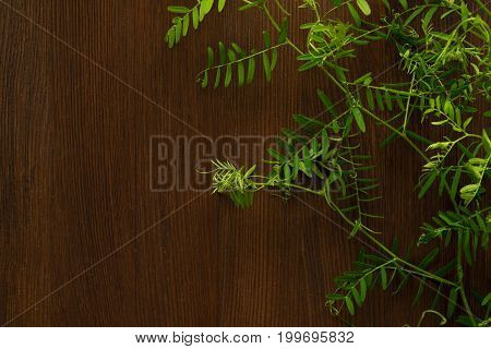 Vicia cracca (tufted vetch) on brown wooden background