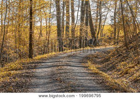 sunny illuminated idyllic indian summer forest scenery wit field path