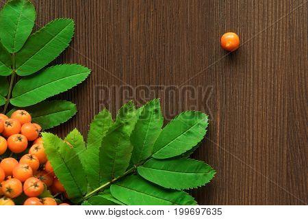 Orange rowan berries with leaves on brown wooden background