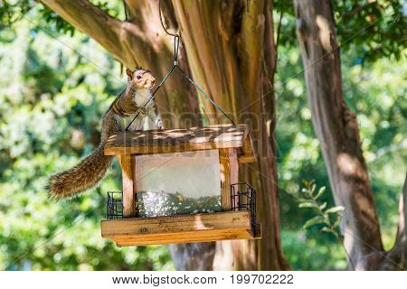 A squirrel sitting atop a bird feeder hanging from a tree.