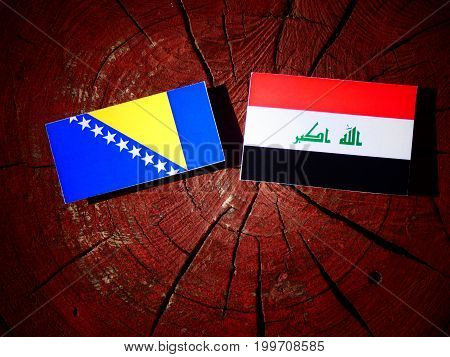Bosnia And Herzegovina Flag With Iraqi Flag On A Tree Stump Isolated