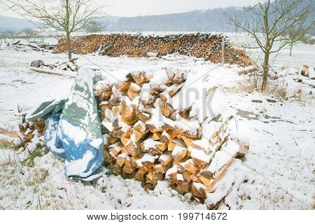 Wintry log pile with different kinds of wood