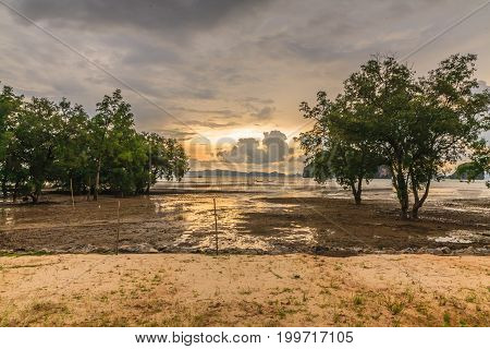 Beautiful sunset from the seacoast and mangrove in the thailand