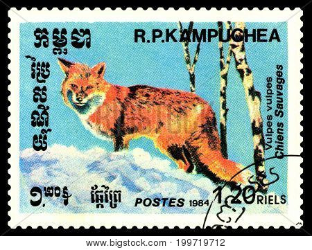 STAVROPOL RUSSIA - August 08 2017 : A Postage Stamp Printed in the Cambodia Shows Foxes (Vulpes vulpes) circa 1984