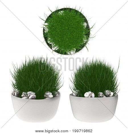 3d rendering pot plant isolated on white