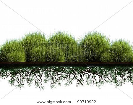 3d rendering side view plant with roots underground
