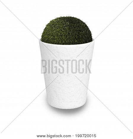 3d rendering pot plant on white background