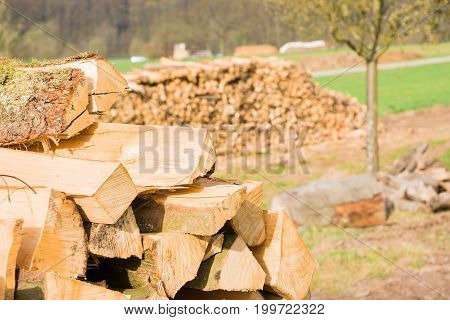 Timber logs stacked on an outdoors lumberyard
