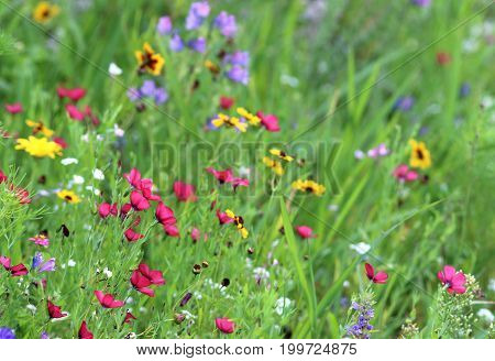 meadow with multi colored flowers background banner