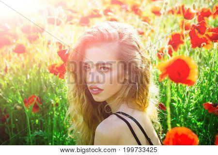 pretty woman or girl with long curly hair hold flower in field of red poppy seed with green stem on natural background summer spring drug and love intoxication opium