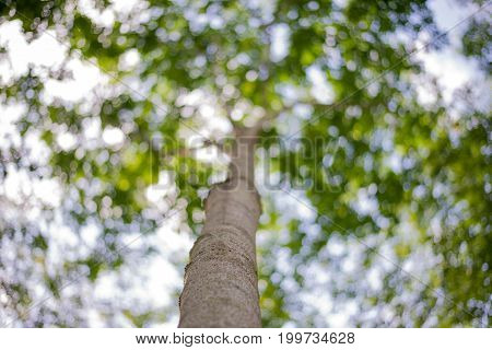 Green Bokeh From Nature Forest, Out Of Focus Background