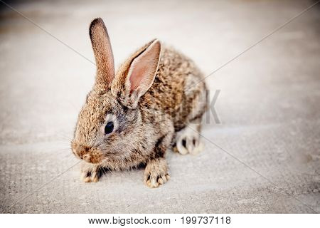 brownish gray little rabbit on a light gray background. Concept farm.