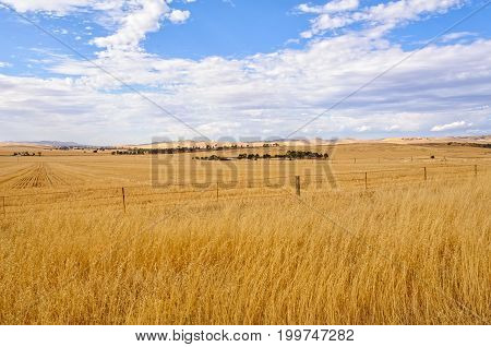 Farm land between Burra and Claire in South Australia