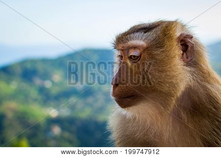 Portrait Of Monkey Face By The The Blue Sky And Mountains Background