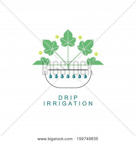 Color vector drip irrigation logo. Can be used for drip irrigation, hydroponics and other types of irrigation.