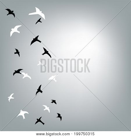 Birds flying in the sky background for the card or banner vector graphic illustration