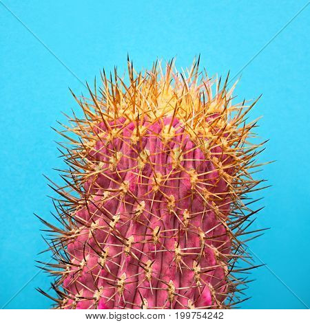 Cactus. Art Gallery Fashion Design. Minimal Stillife. Concept on blue background. Detail