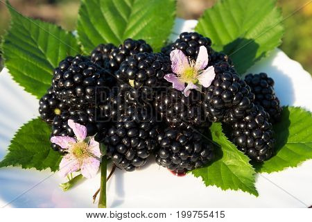 Black Blackberries On A White Plate. On The Background Of The Garden.