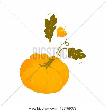Flat cartoon style pumpkin, Halloween, thanksgiving symbol with fall, autumn leaves, cartoon vector illustration isolated on white background. Orange pumpkin, cartoon Halloween, Thanksgiving symbol
