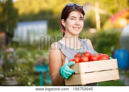 Picture of girl with tomatoes in wooden box at summer cottage