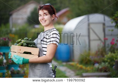 Photo of brunette with cucumber crop in box on background of garden