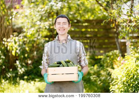 Photo of brunet holding box with cucumbers in summer, afternoon