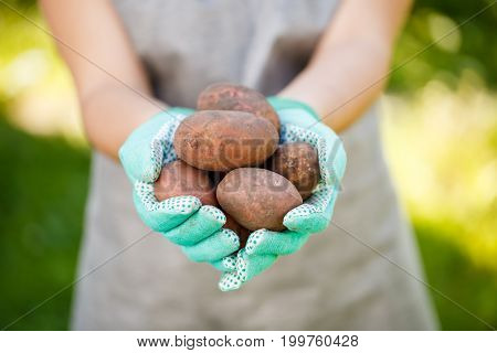 Photo of person holding potatoes in palms of day