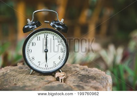 clock on wood tree nature background time at 6 o'clock morning