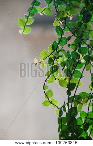 Close up of creeper plant with light of the day and blur background