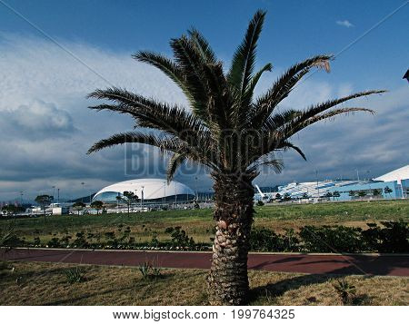 Beautiful palm tree in Sochi park on the background of Olympic facilities during the day in clear weather