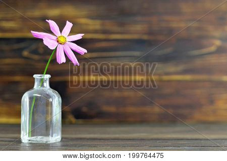 Close up of pink cosmos flower on wooden background