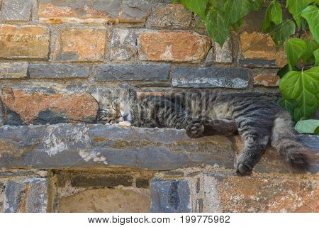 View on a sleeping Cat on a Stone Wall. Close-up of a grey Cat on a Brick Wall. Sleeping Cats