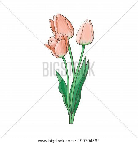 vector tulip set isolated illustration on a white background. Flower bouquet with opened blooming blossom , stem and leaves realistic hand drawn side view. Spring, love and care symbol