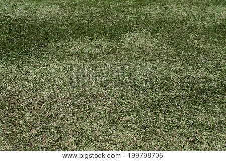 green grass texture landscape field environment  park