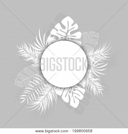 Tropical design with white palm leaves and plants on gray background with place for text vector illustration