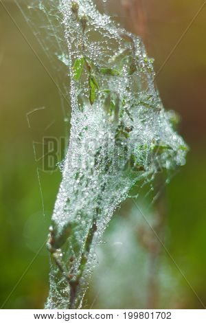 Spider Web With Dew Drops On A Background Of Blurred Green Grass, Macro