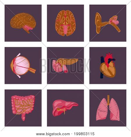 assembly of flat shading style icon human organs