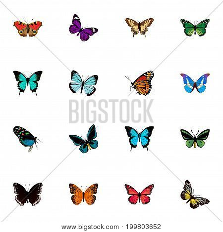 Realistic Summer Insect, Milkweed, Tiger Swallowtail And Other Vector Elements