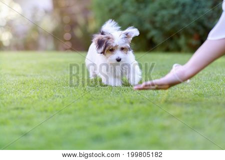 Backyard Dog Training With Cute Puppy And Owner