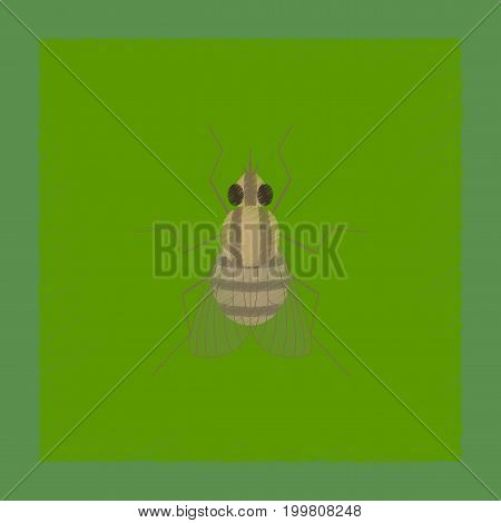 flat shading style illustration of insect fly